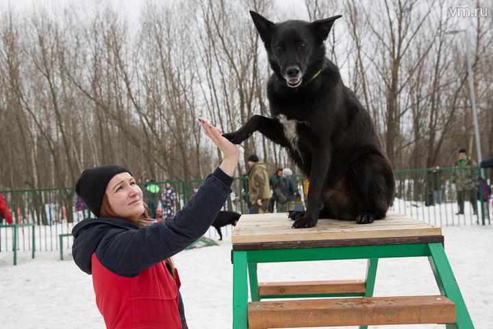 Четвероногие обитатели Москвы: кого лучше всего держать дома
