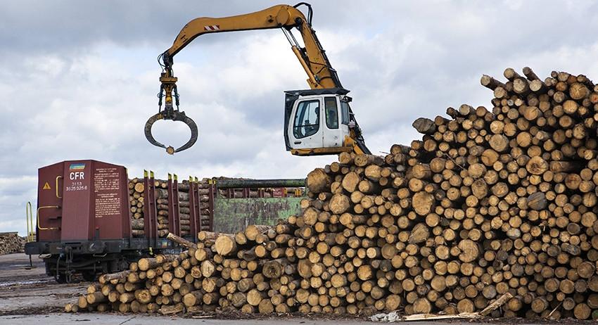 Путин: сфера защиты лесов РФ…