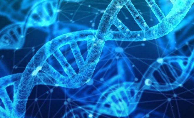 В генах части африканских народностей нашли следы неизвестного науке типа людей Культура