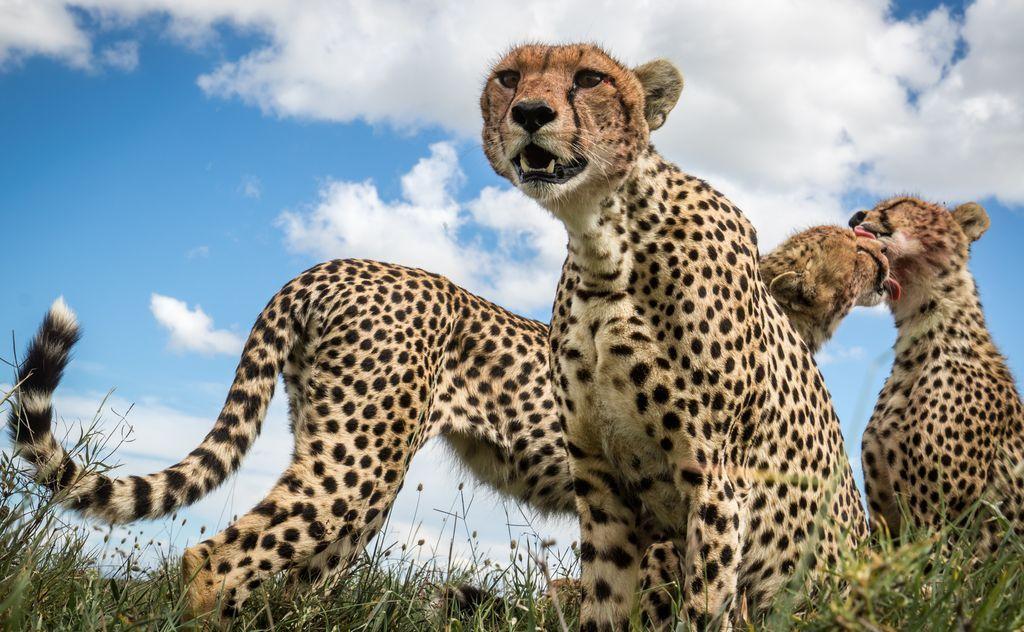 Подборка лучших фотографий, опубликованных журналом National Geographic в ноябре 2017 года