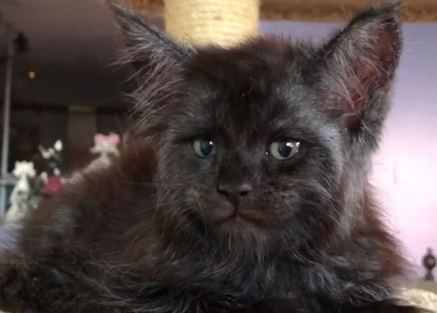 """Котенок с """"человеческим лицо…"""