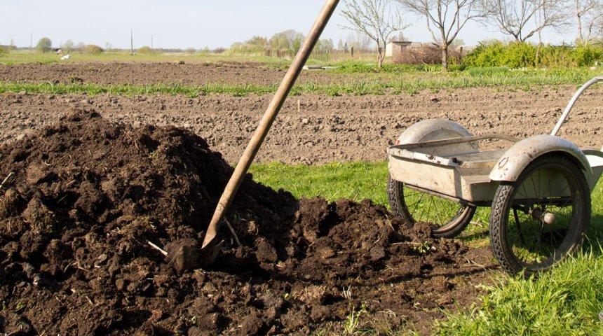 Тип почвы на участке – как определить и улучшить структуру