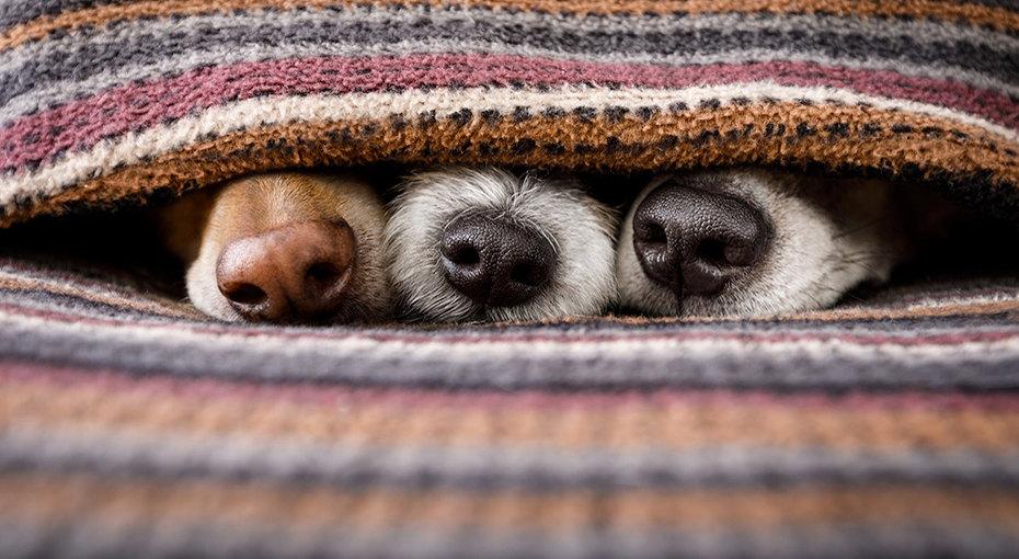 10 лайфхаков, которые обязан знать каждый владелец собаки