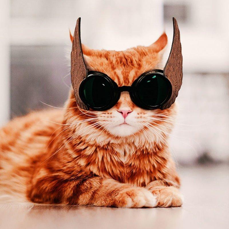 фото для авы солнечная кошка можно