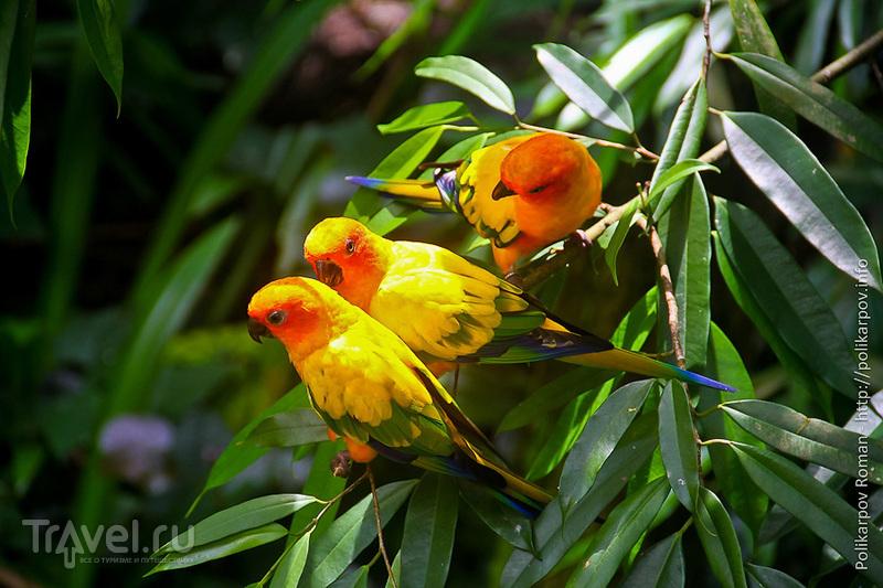 Парк птиц в Сингапуре