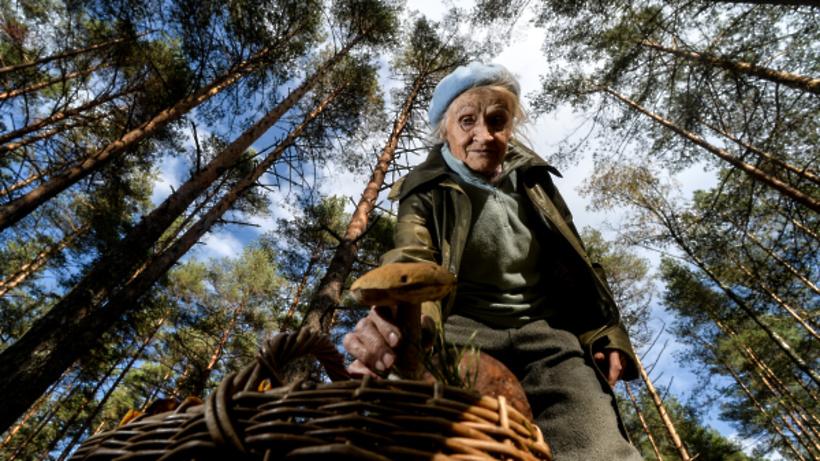 В Подмосковье собираются установить мировой рекорд по сбору грибов