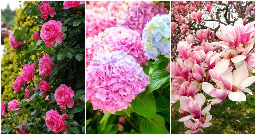 Эффектные и яркие растения, которые преобразят ваш сад