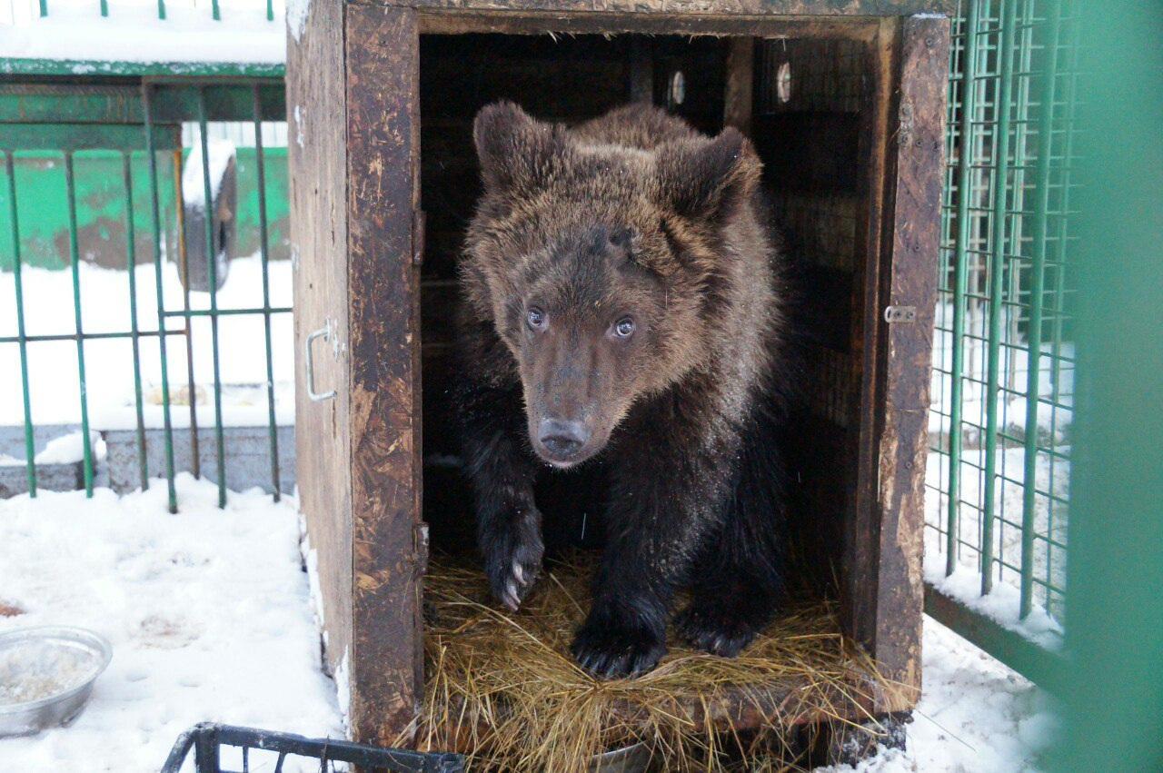 Плохого артиста Умку выставили из цирка! А медвежонок только рад – он теперь лопает груши и дружит с лосихой