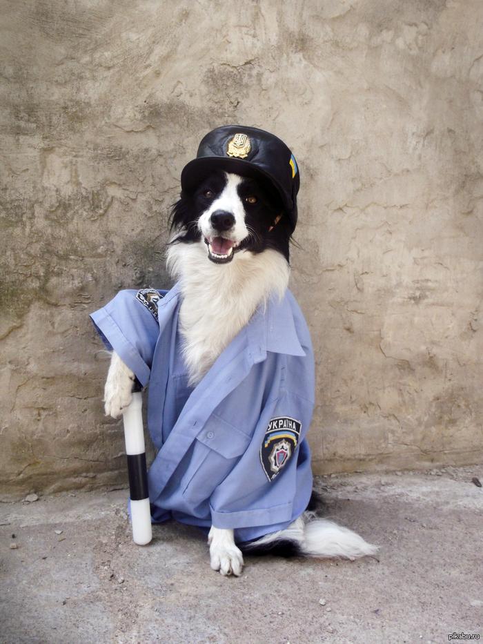 Собака на посту картинка