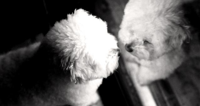 Собачье счастье