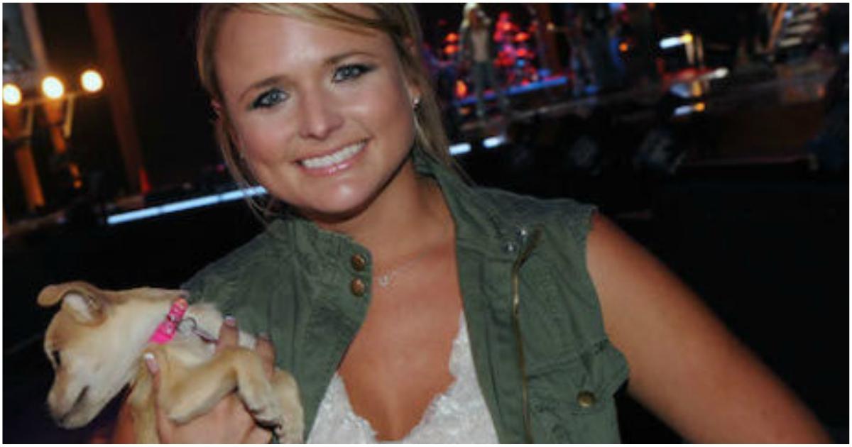 Её доброе сердце спасло уже 70 собак! Но она намерена сделать ещё больше…