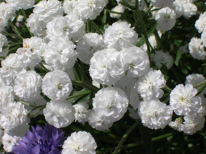 Грустные цветы фото мама