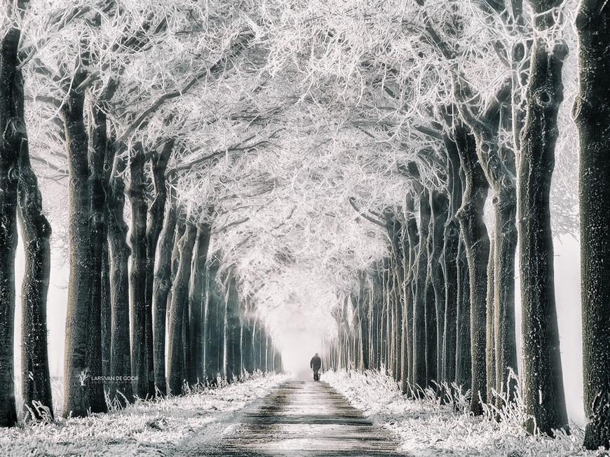 Лесные пейзажи голландского фотографа Ларса ван де Гура Путешествия,фото