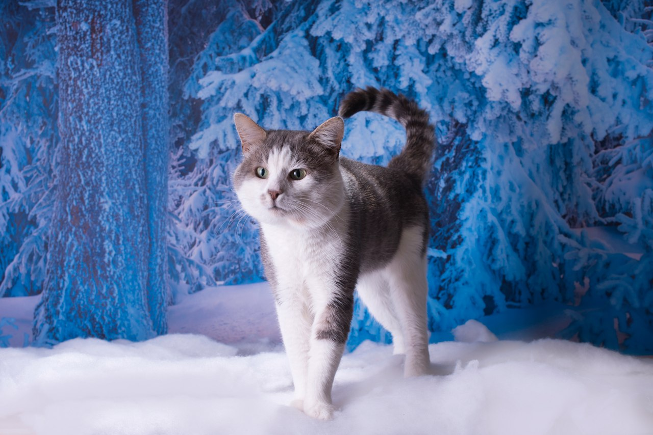 Этот потрясающий кот готов стать хранителем вашего семейного очага!