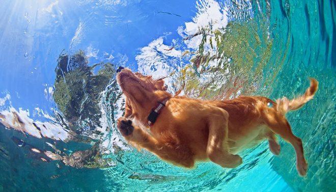 Осторожно: соленая вода! Какую опасность таит в себе пляжный «отдых» для собаки