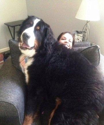 Собаки, которые не понимают, что они огромны