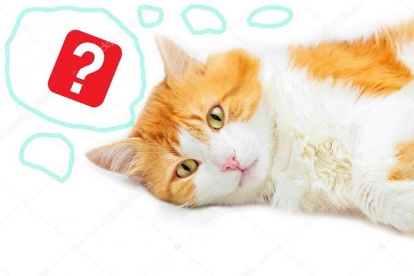 Вопрос-ответ про котиков!