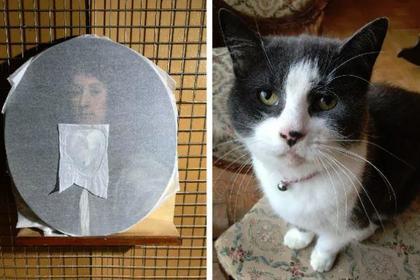 Кот испортил картину на полм…