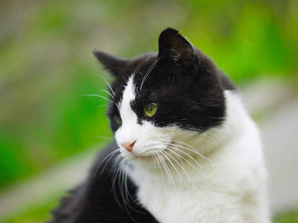 Воспитание кота Лысого...