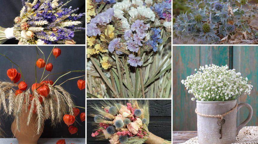 : Сухоцветы