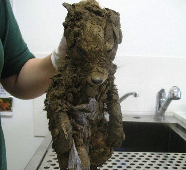 Спасение грязного лисёнка
