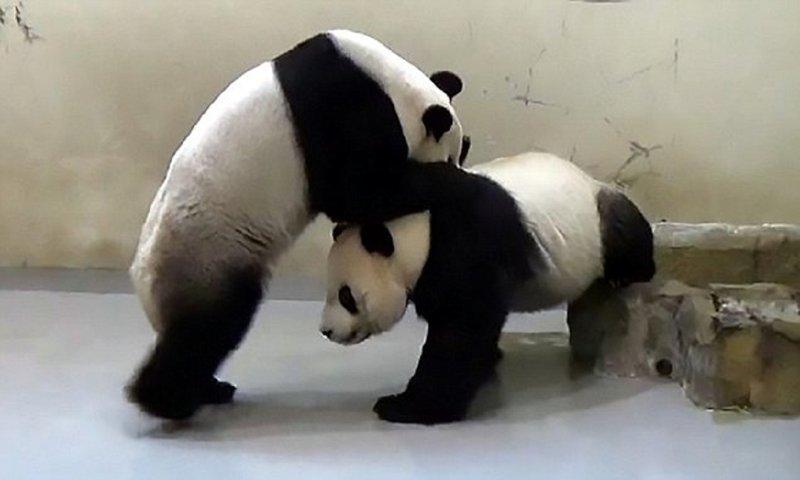 В зоопарке Тайваня искусстве…