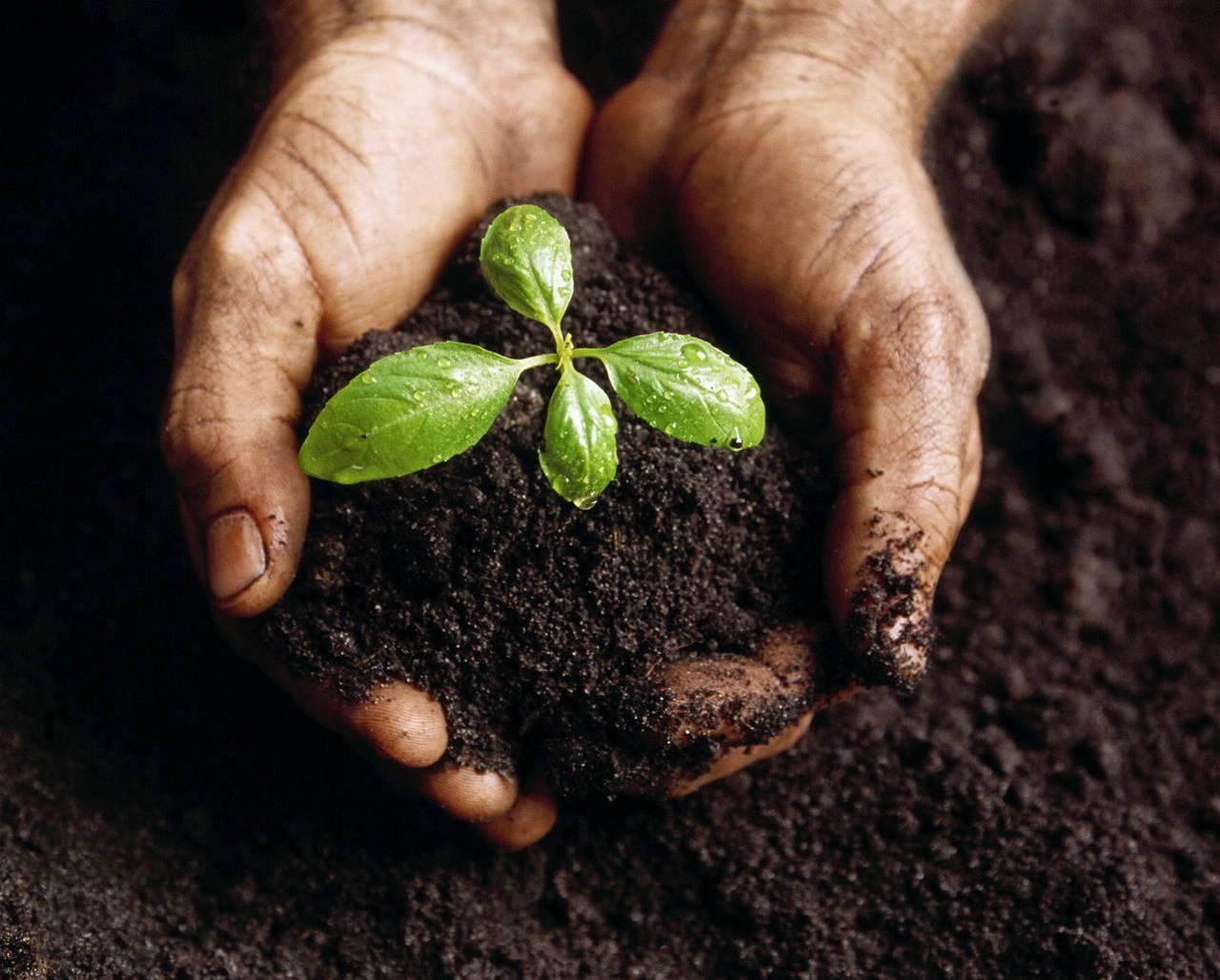 Проверка влажности почвы
