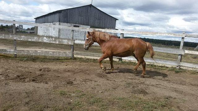 Конь-долгожитель по кличке Дед (10 фото)