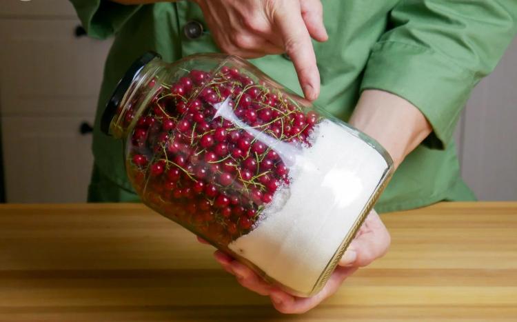 Заготавливаю желе из красной смородины, не снимая с веточек: просто и вкусно