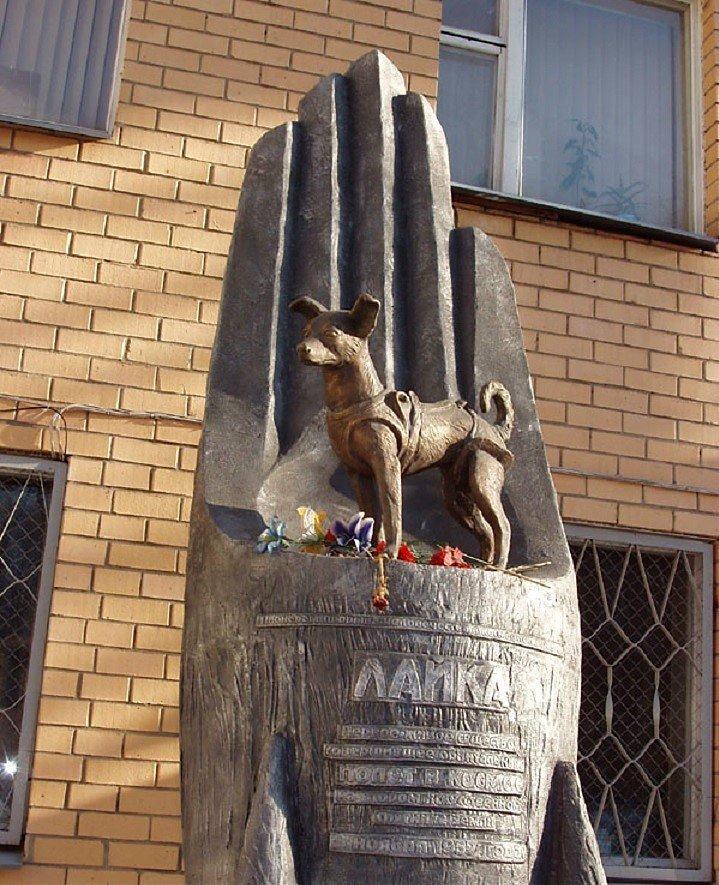 Полет и гибель собаки Лайки: вопросы и ответы «Спутник-2», день в истории, космос, собака Лайка