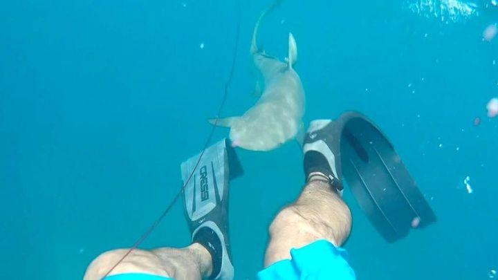 Подводный охотник сам чуть не превратился в добычу