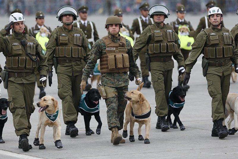 Чилийские полицейские вышли на парад с песиками в ботиночках и порвали мимиметр зрителей Chilean Military Parade, Puppies, Santiago, ynews, парад, чили, щенки