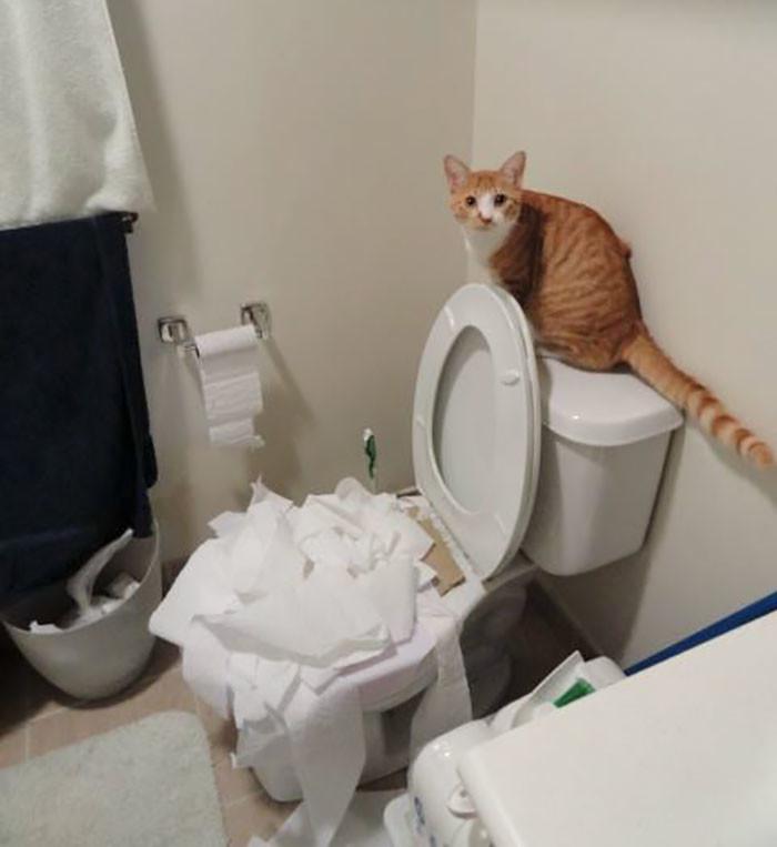 Научился пользоваться туалетом дом, животные, проступок, шалость