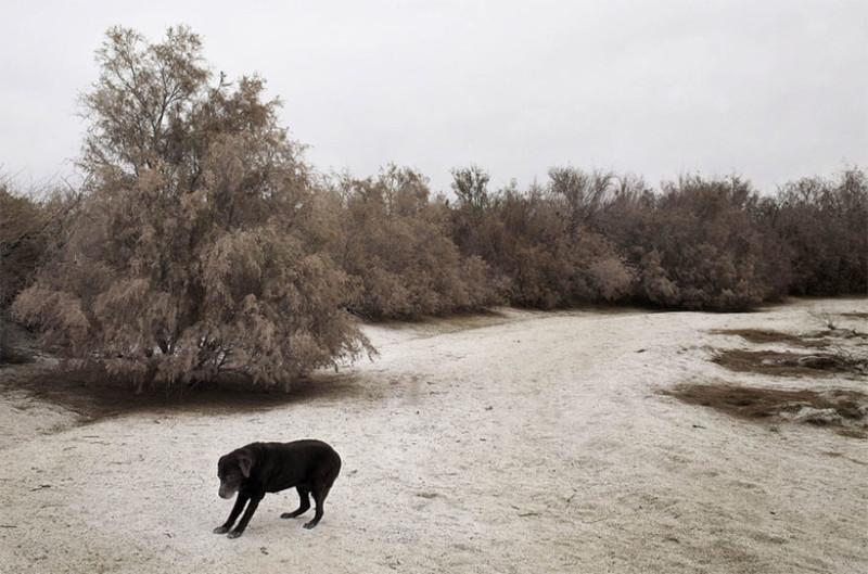 Отис (15 лет) собаки, фото собак, фотографии животных