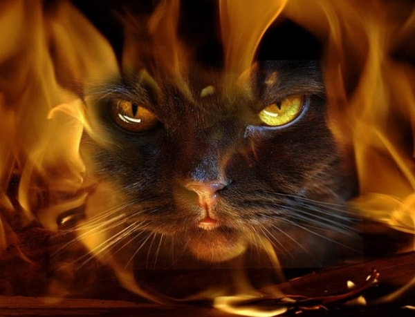 Никогда не пускай в дом кошек