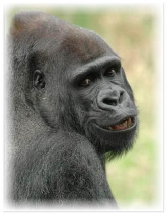 улыбающиеся животные