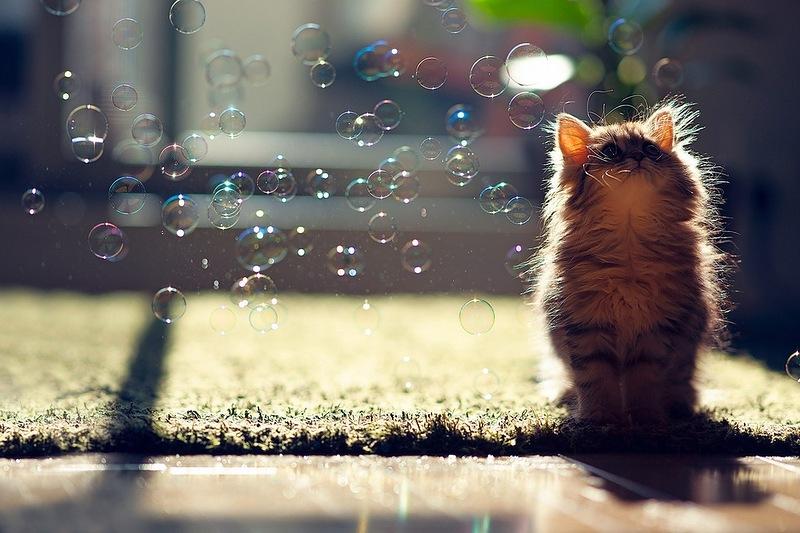 Трогательные фотографии животных