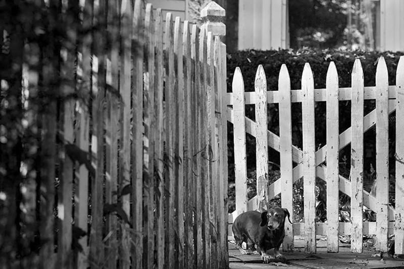 Брик (19 лет) собаки, фото собак, фотографии животных