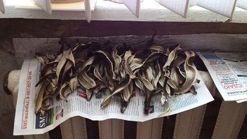 Как сделать удобрение из банановой кожуры для комнатных растений? советы