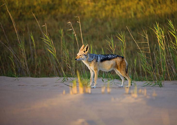 Прогулка по побережью Намибии