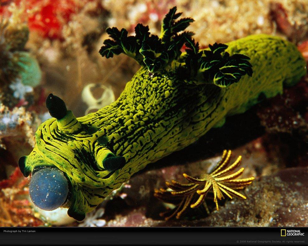 Удивительные жители подводного мира в фотографиях