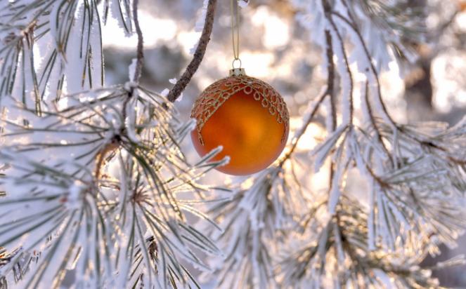 Скоро Новый год: врачи рассказали о пользе сосны в доме