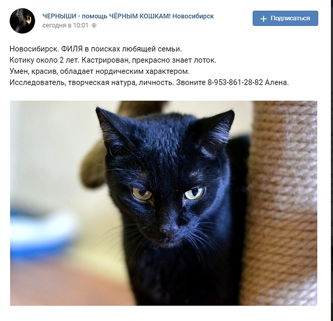 Волонтеры назвали кота Филей и стали искать ему хозяев. Фото: СОЦСЕТИ