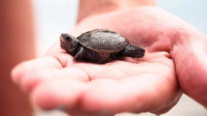 Самые маленькие животные мира — меньше вашего пальца!