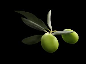 Как сделать шампунь из оливкового масла в домашних условиях?