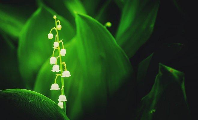 Как уберечь ребенка на даче: 36 красивых, но очень опасных растений