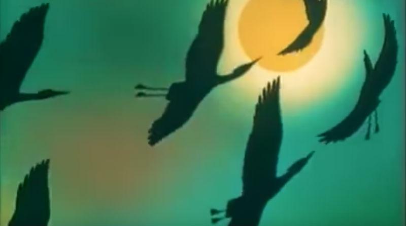 Кто на самом деле написал музыку для заставки к передаче «В мире животных»