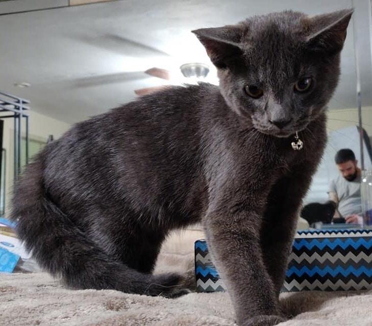 «Мяу!» — плакал котенок, догоняя незнакомца… Но он обрел семью