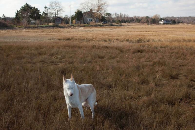 Джун (16 лет) собаки, фото собак, фотографии животных