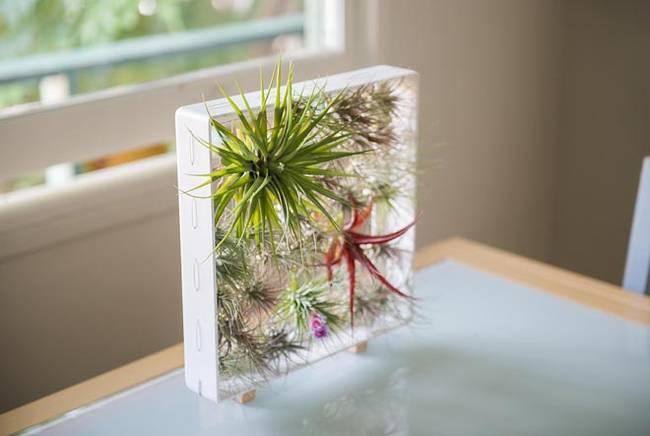 Живая стена из растений в небольшой рамке